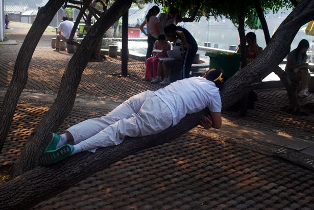 Woman Planking on Tree Trunk
